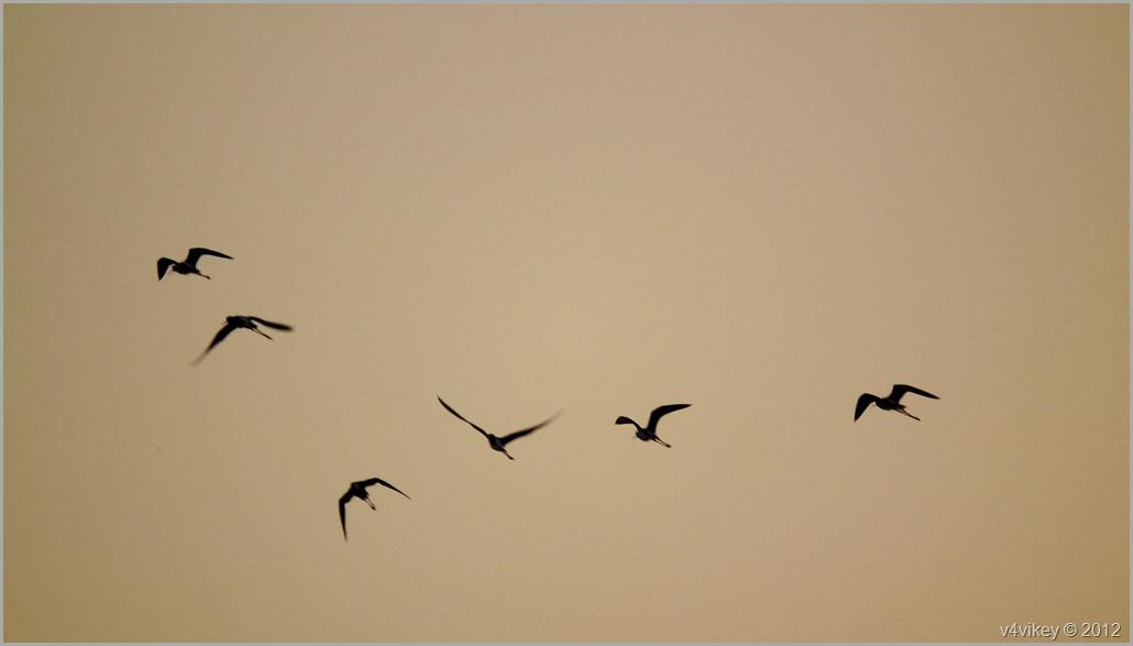 Birds flying together