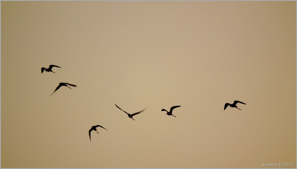 Birds flying together