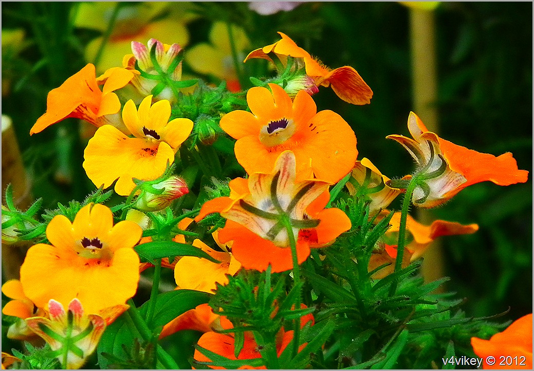Different Flowers in different Colors