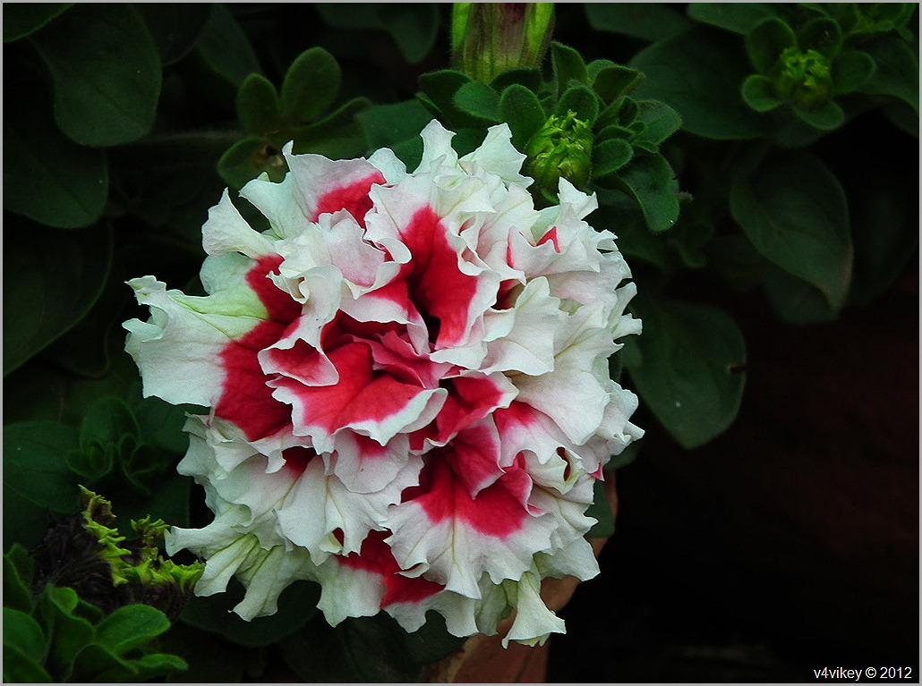 Different beautiful flowers wallpaper tadka different flowers in different colors different kind of flowers izmirmasajfo Gallery