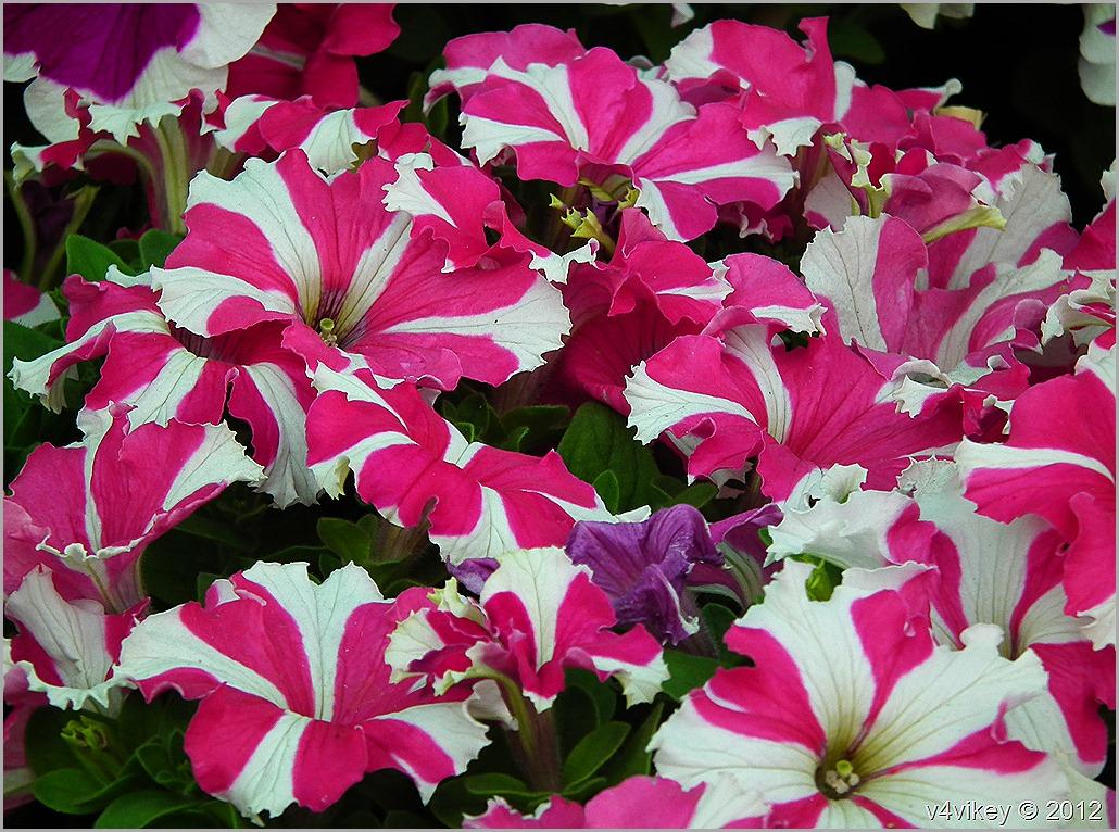 Different beautiful flowers wallpaper tadka different flowers in different colors different kind of flowers izmirmasajfo