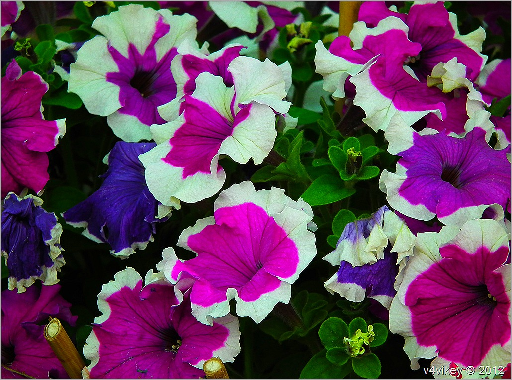 Different beautiful flowers wallpaper tadka for What makes flowers different colors