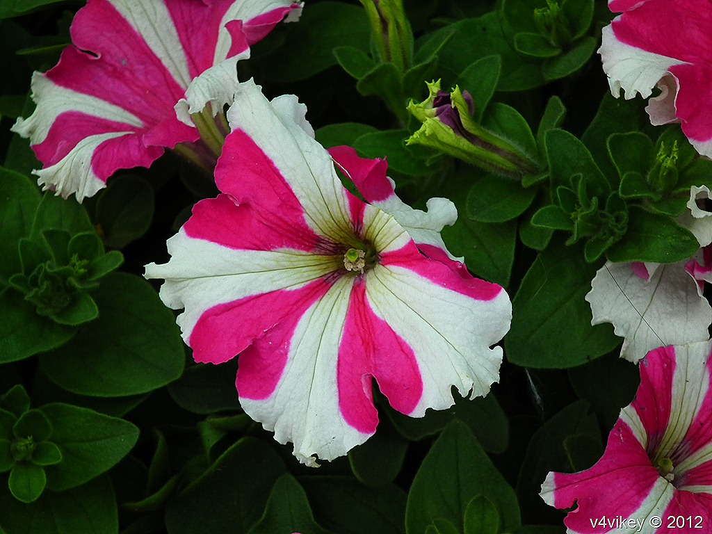 Wallpapers of beautiful flowers wallpaper tadka different flowers in different colors izmirmasajfo
