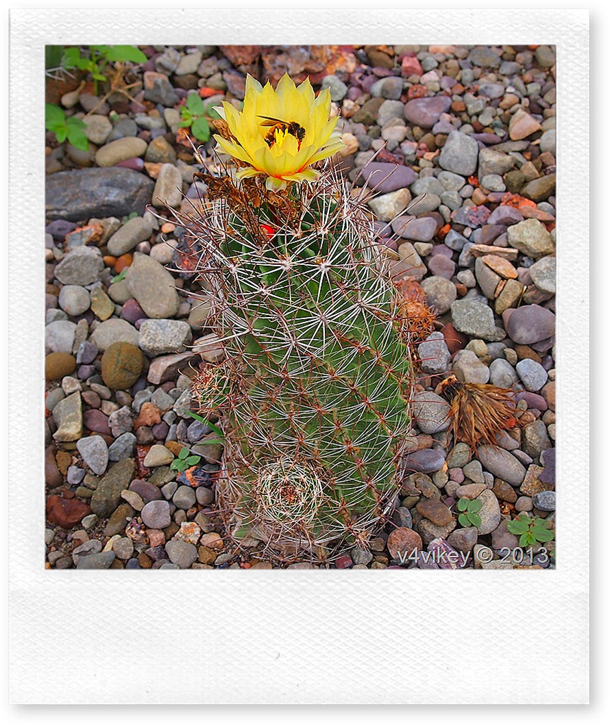 Cactus Plant with Flower