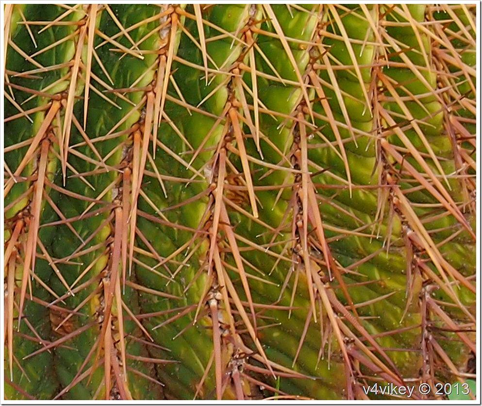 Round Cactus Plant