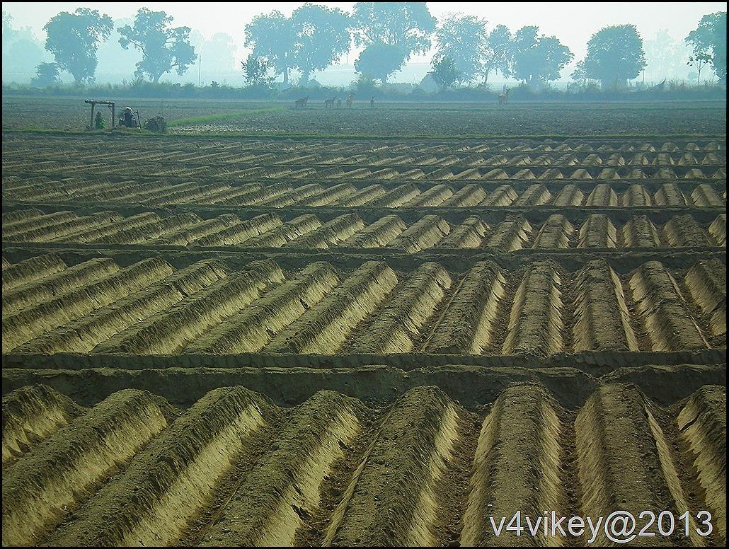 Beauty of Indian Fields