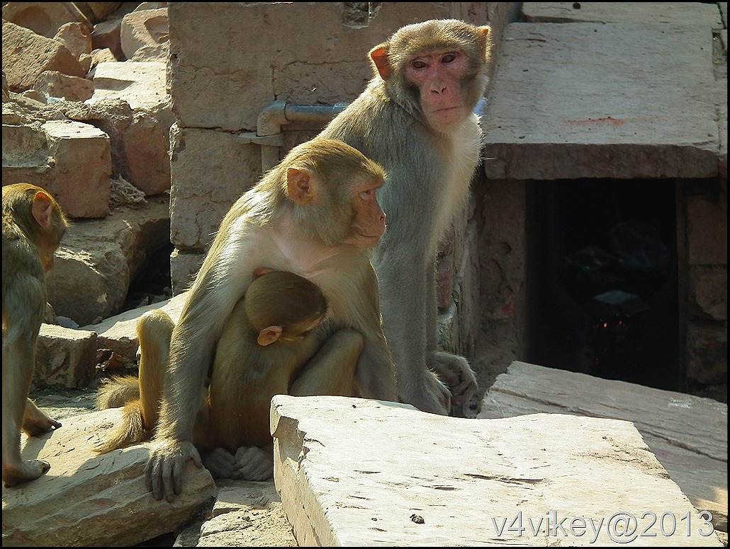 Monkey family Photograph