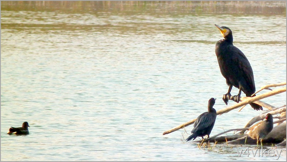 Bird Watching Photography (10)