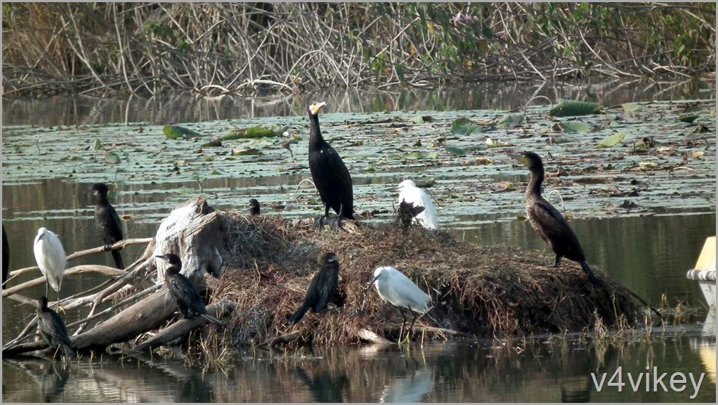 Bird Watching Photography (1)