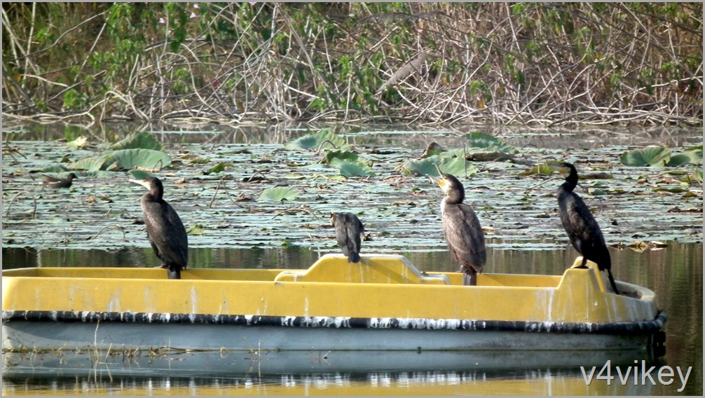 Bird Watching Photography (2)