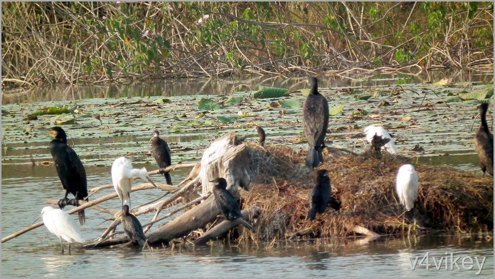 Bird Watching Photography (3)