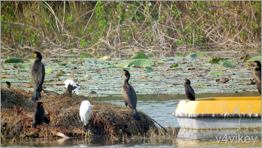 Bird Watching Photography (4)