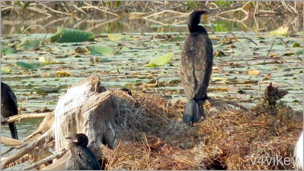 Bird Watching Photography (5)