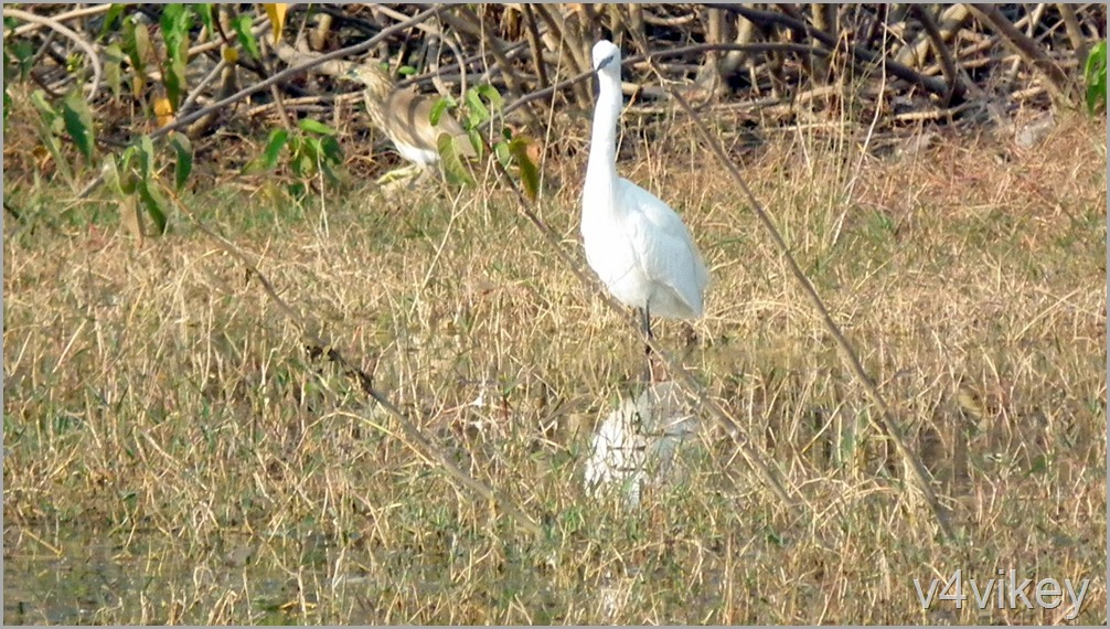 Bird Watching Photography (7)