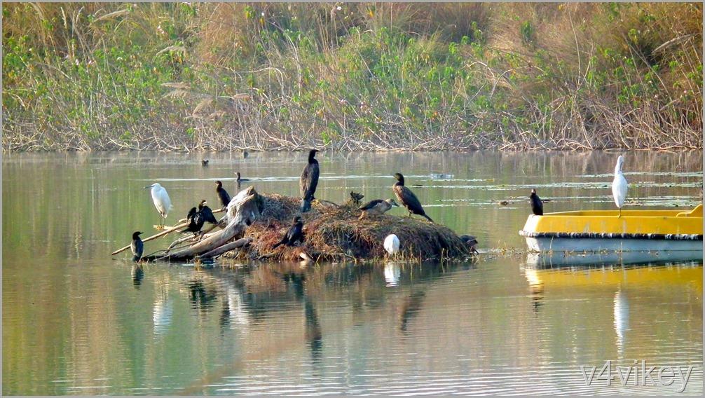 Bird Watching Photography (8)