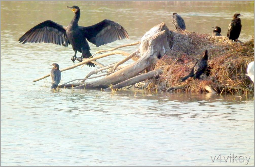 Bird Watching Photography (9)