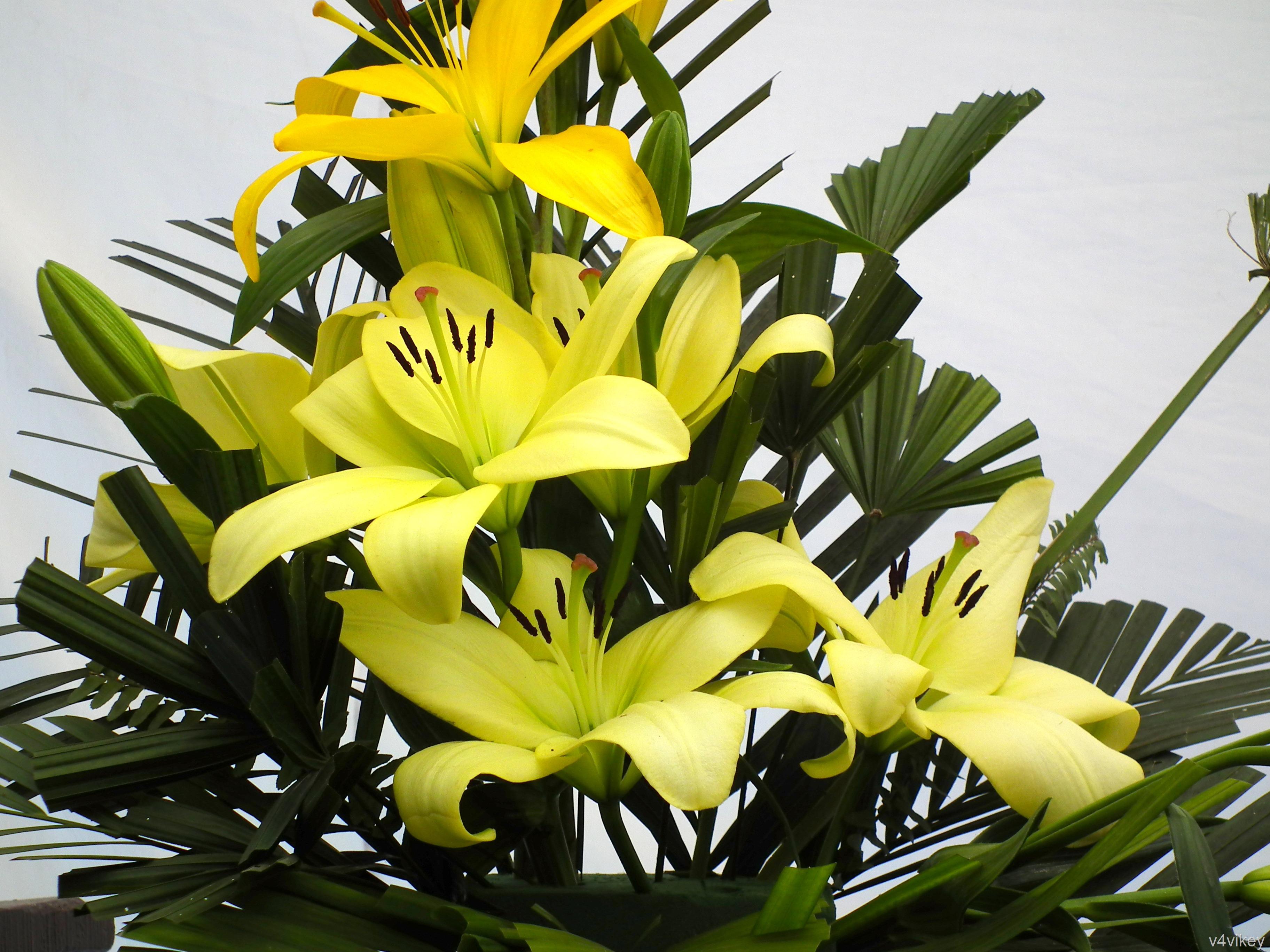 Lily Flower Bouquet Wallpaper Tadka