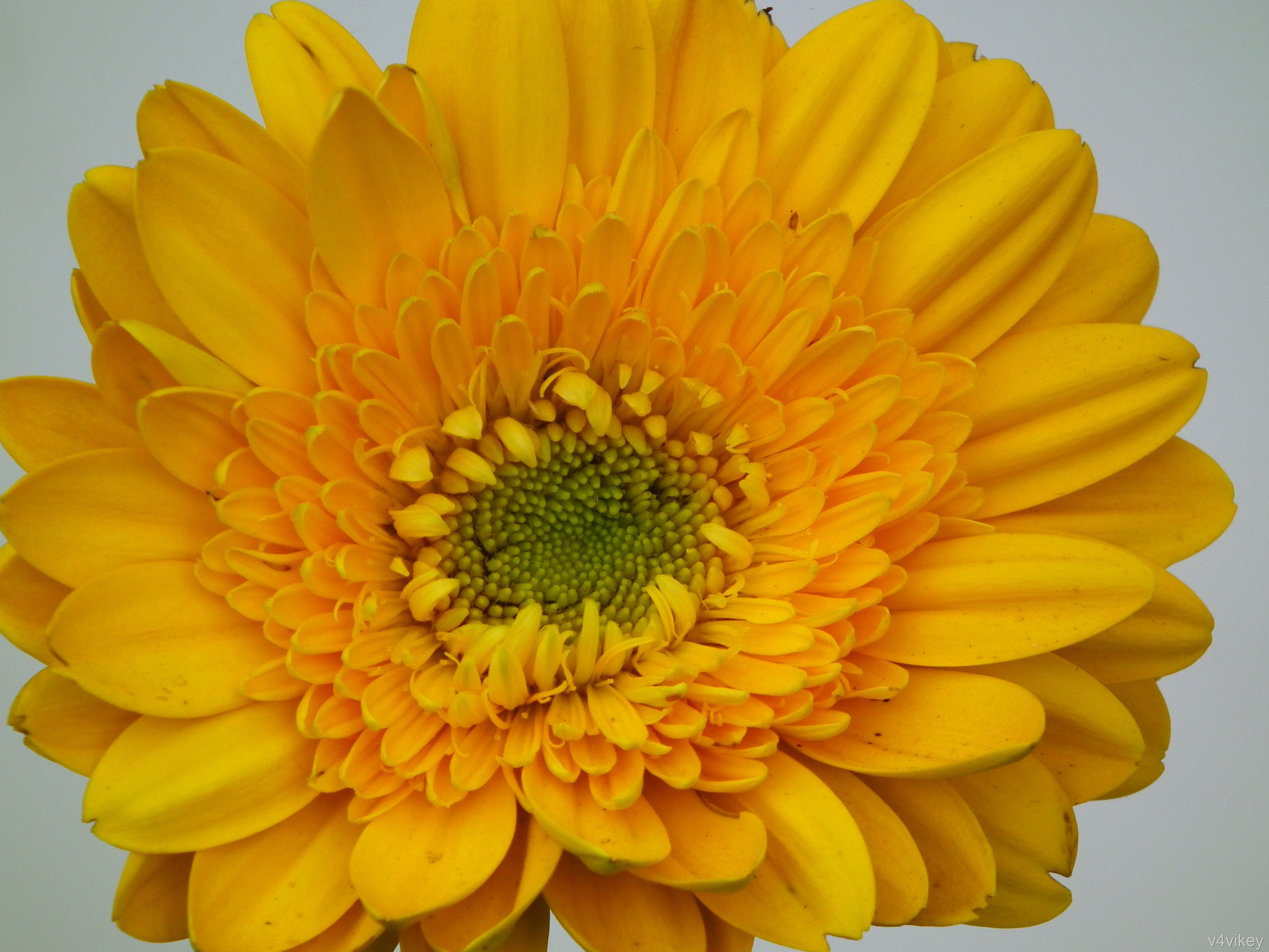 Daisies are also a Classic Symbol of Beauty