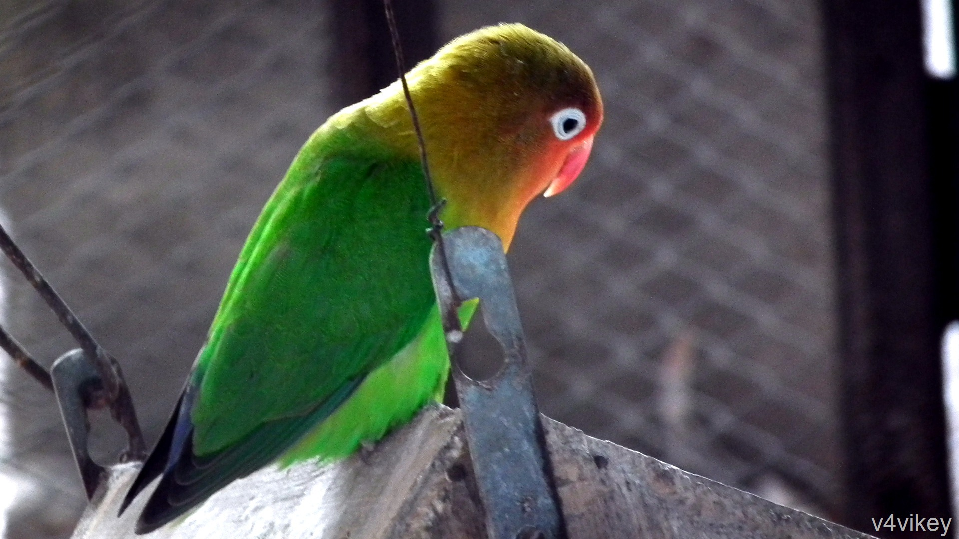 essay on birds parrot for std third Collection of resources for teaching how to write expository essays visit the post for more which will be required of them in the third grade and in the.