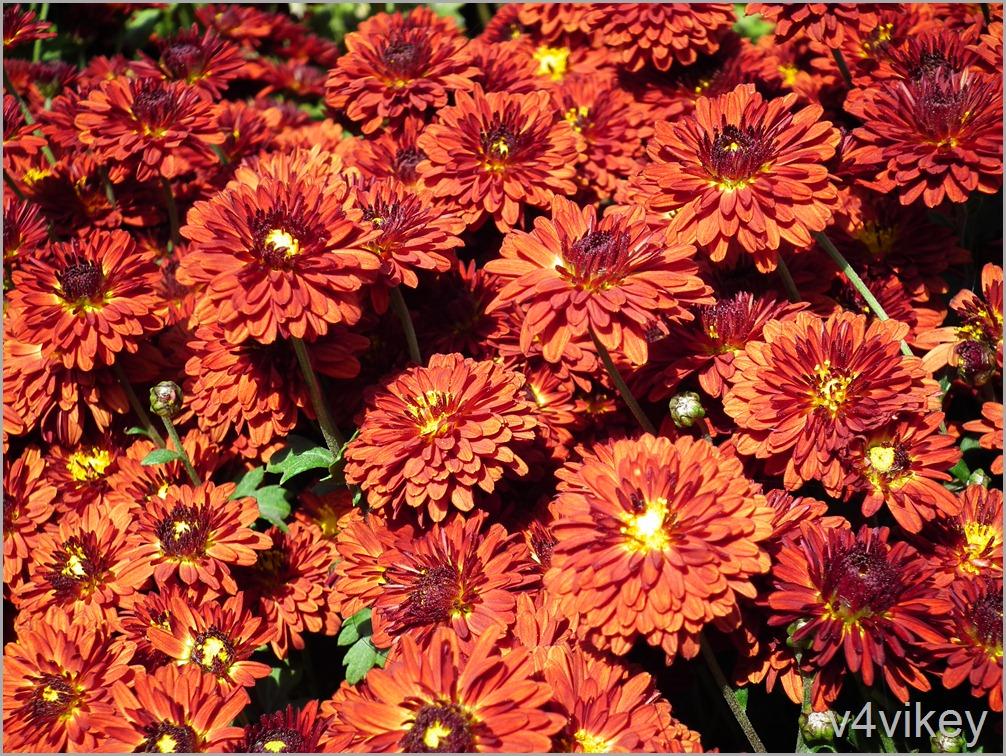 Orange Color Decorative Flowers