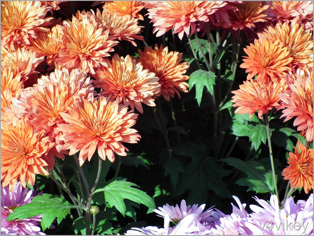 Orange Decorative Flowers