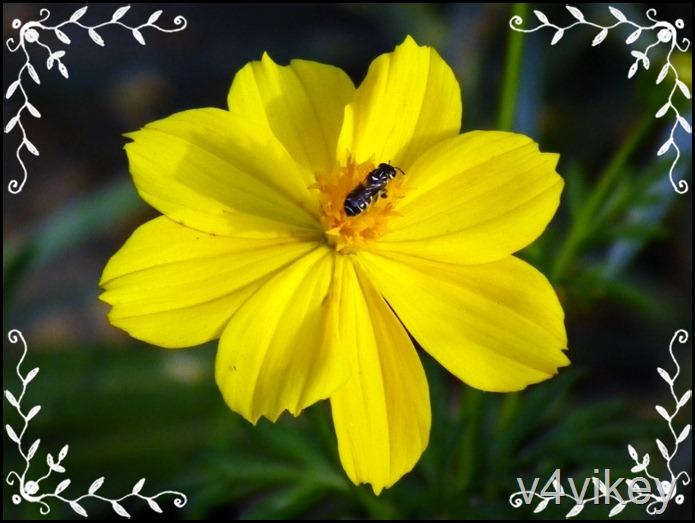 Flowers by v4Vikey  (5)