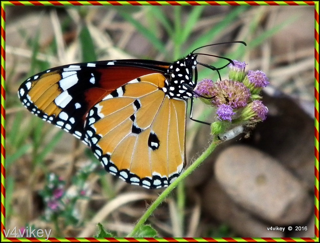 Flowers and butterfly