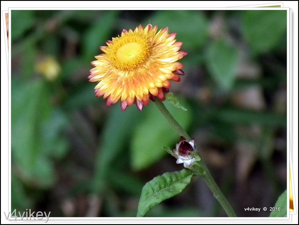 Flowers by v4Vikey (8)