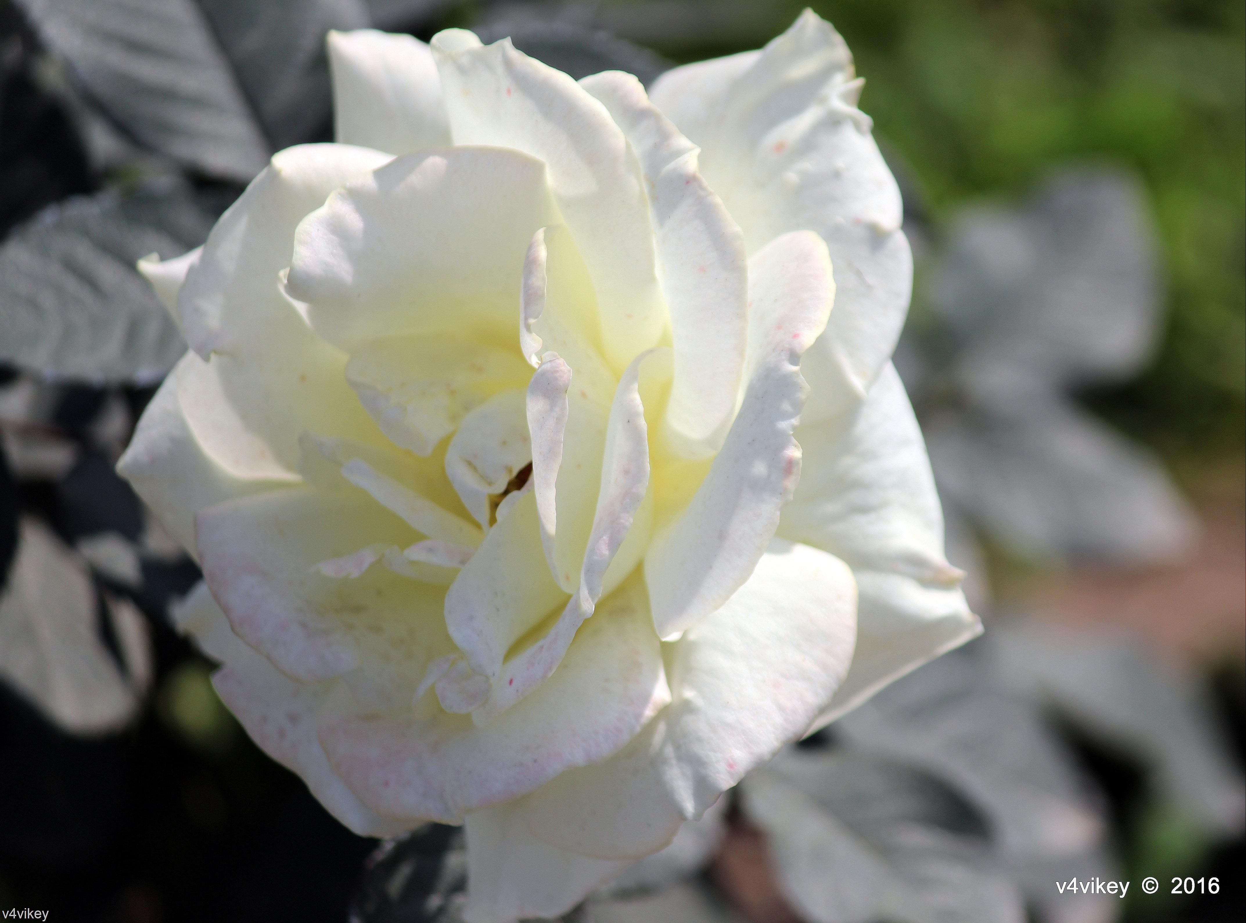 Flowers in Macro Stunning Flower Photography Pink Star uk